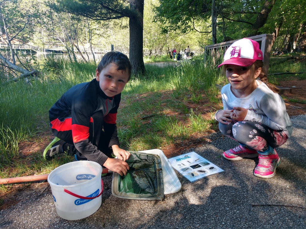 Looking for bugs in Hamlin Lake